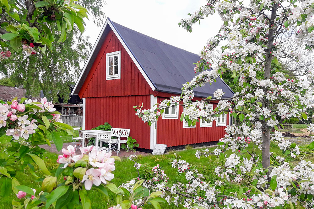 Behind the old cottage are a few apple trees, with blommoms in early summer and delicious fruits in the fall.